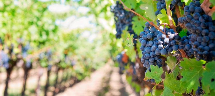 El tipo de tierra, nueva clasificación para los vinos